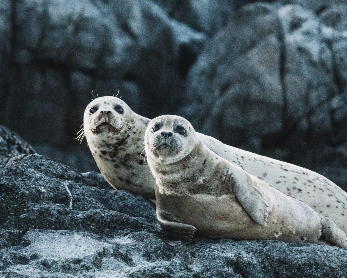 Aukštesnio lygio komunikacija Grįžtamasis ryšys:kaip jį teikti ir priimti